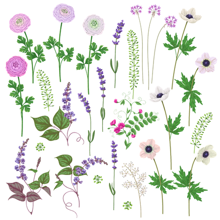 Pink and lilac flowers set. Buttercup, anemone, lavender isolated on white. Illustration