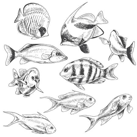 Hand drawn underwater natural elements. Sketch of reef animals. Monochrome fishes set.