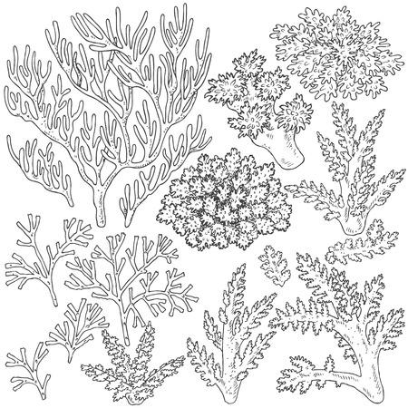 手には、水中の自然な要素が描画されます。サンゴ礁のスケッチ。  イラスト・ベクター素材