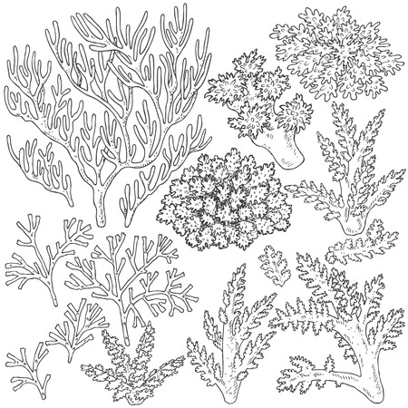 Hand drawn underwater natural elements. Sketch of reef corals.