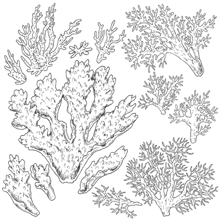 Hand drawn underwater natural elements. Sketch of reef corals. Black and white set illustration coloring page. Иллюстрация