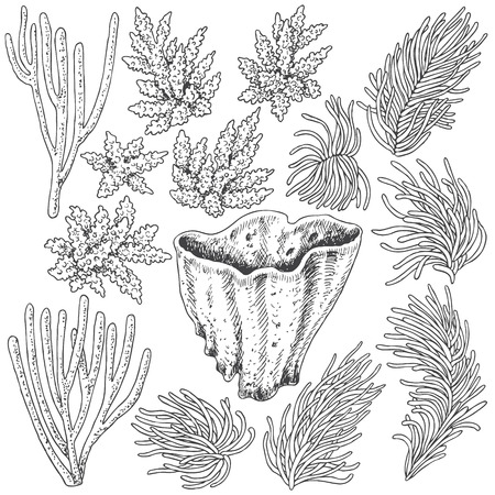 polyp: Hand drawn underwater natural elements. Sketch of reef corals.