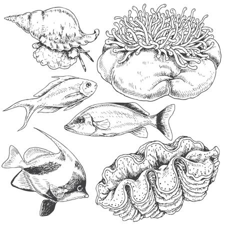 actinia: Hand drawn underwater natural elements. Sketch of reef animals. Illustration