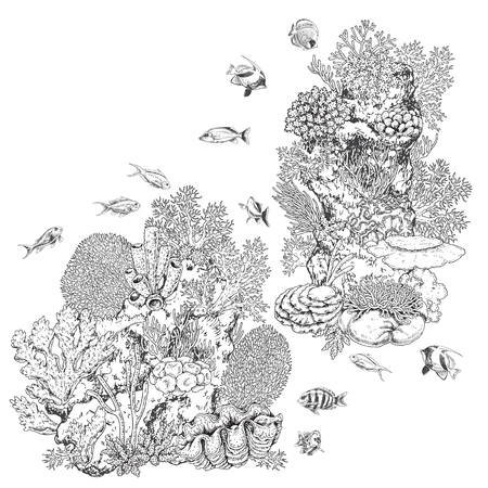 Hand drawn underwater natural elements. Sketch of reef corals and swimming fishes. Monochrome coral colony on rock. Black and white illustration coloring page.