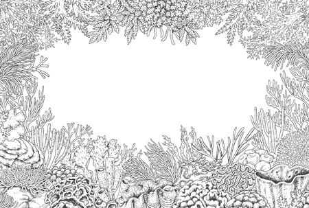 polyp: Hand drawn underwater natural elements. Sketch of reef corals background.  Monochrome rectangle frame with space for text. Black and white illustration coloring page.