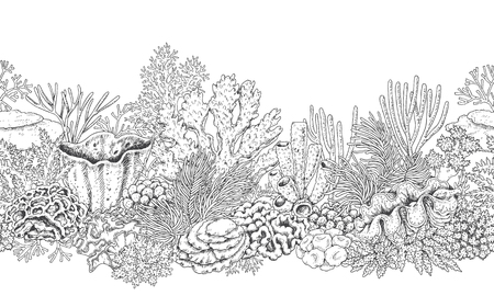 Hand drawn underwater natural elements. Seamless line horizontal pattern with reef corals. Monochrome sea bottom texture. Black and white illustration. Vector sketch.