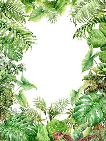 Hand getrokken takken en bladeren van tropische planten. Natuurlijke groene achtergrond met ruimte voor tekst. Waterverf rechthoek verticale frame. Stockfoto - 75981059