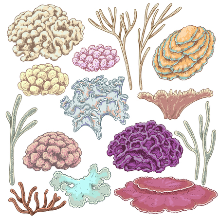 Hand drawn underwater natural elements. Sketch of reef corals. Colorful coral set isolated on white background. Ilustração