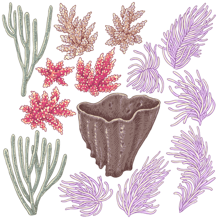 Éléments naturels sous-marins dessinés à la main. Croquis des coraux de corail. Ensemble de coraux colorés isolé sur fond blanc. Vecteurs