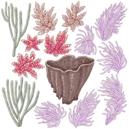 Elementos naturales subacuáticos dibujados a mano. Bosquejo de corales de arrecife. Conjunto de coral colorido aislado sobre fondo blanco. Ilustración de vector