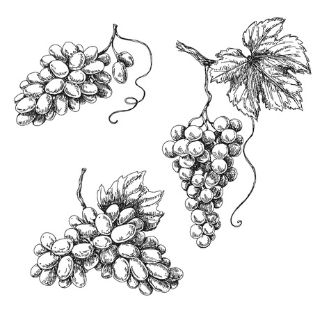 Set of grapes monochrome sketch. Hand drawn grape bunches. Stock Illustratie