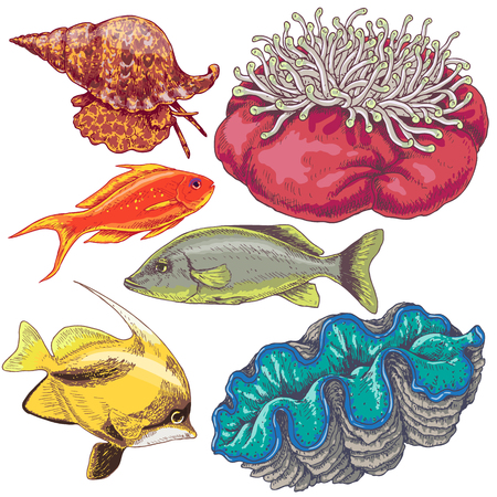 Hand drawn underwater natural elements. Set of reef animals isolated on white background. Colored fishes, mollusks and actinia.
