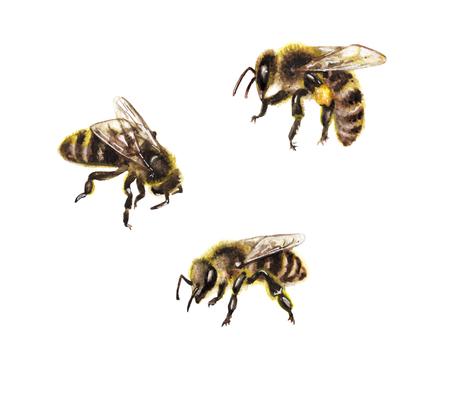 Hand getekende insecten geïsoleerd op een witte achtergrond. Set van aquarellen honingbijen.