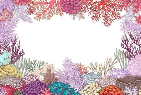 Hand gezeichnete Unterwassernaturelemente. Skizze von klaren Riffkorallen auf weißem Hintergrund. Farbiger horizontaler Vierecksrahmen mit Platz für Text. Standard-Bild - 77438459