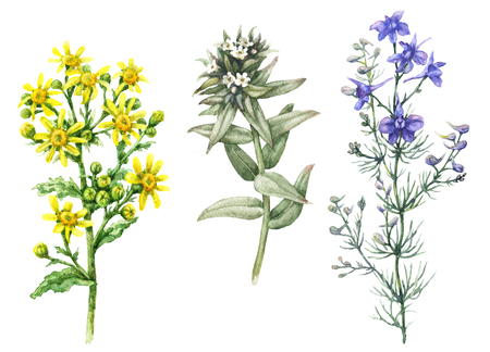 Hand drawn floral set. Watercolor wild larkspur, yellow chamomile and small white flowers isolated on blank background. Summer wildflowers aquarelle sketch. Stock Photo