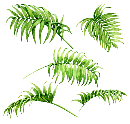 Hand drawn branches and leaves of tropical plants. Palm fronds  watercolor sketch. Green leaf set  isolated on white background.