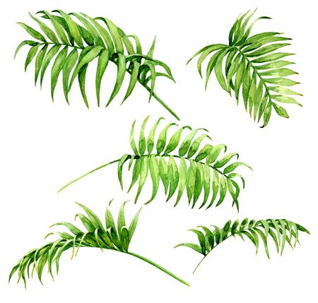 Hand getrokken takken en bladeren van tropische planten. Palm fronds aquarel schets. Groene bladreeks die op witte achtergrond wordt geïsoleerd. Stockfoto