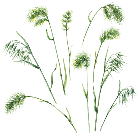 手描き花セット。白い背景に分離された水彩画の野草。 野生エンバクおよびブルーグラスをスケッチします。