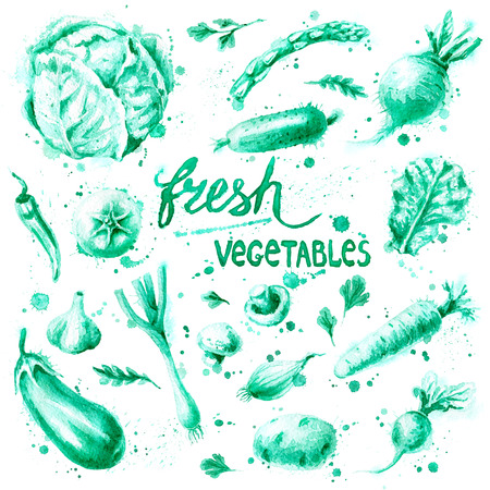 Hand drawn food illustration. Watercolor green monochrome vegetable set with splashes on white background. Organic food and natural product theme. Stock Photo