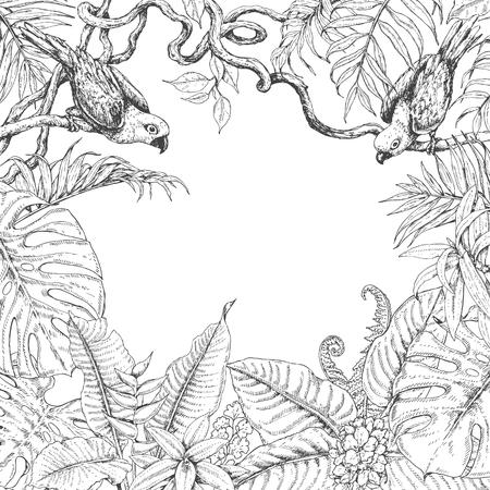 Hand getrokken takken en bladeren van tropische planten. Zwart-wit vierkant bloemenkader met vogels die op de takken van Liana zitten. Zwart-witte grens met ruimte voor tekst. Vector schets.