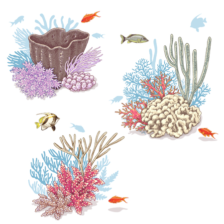 Hand drawn underwater natural elements. Sketch of vivid reef corals and swimming fishes isolated on white background. Ilustracja