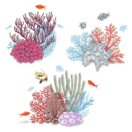oceanarium: Hand drawn underwater natural elements. Sketch of vivid reef corals and swimming fishes isolated on white background. Illustration