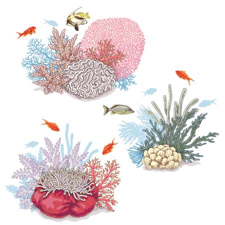 손으로 그린 된 수 중 자연 요소입니다. 생생한 리프 산호와 흰색 배경에 고립 수영 물고기의 스케치. 일러스트