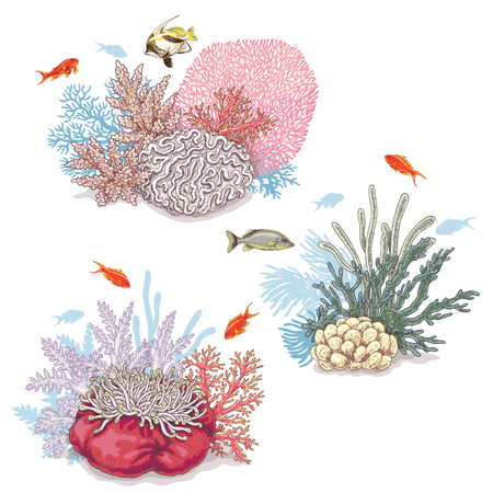 Hand drawn underwater natural elements. Sketch of vivid reef corals and swimming fishes isolated on white background. Illustration