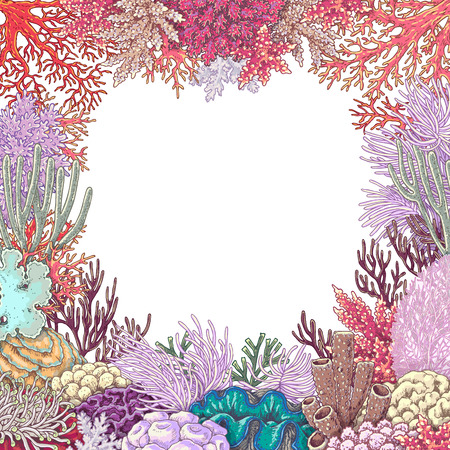 Hand drawn underwater natural elements. Sketch of vivid reef corals on white background. Colored square frame with space for text.