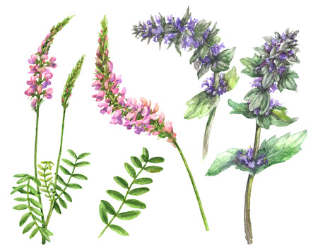 Hand drawn floral set. Watercolor pink and lilac wild flowers isolated on white background. Summer wildflowers aquarelle sketch.