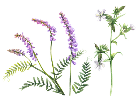 Hand drawn floral set. Watercolor wild flowers isolated on white background. Summer wildflowers aquarelle sketch. Stock Photo - 80082484