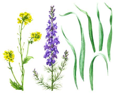 Hand getrokken floral set. Waterverf wilde bloemen die op witte achtergrond worden geïsoleerd. Zomer wilde bloemen en grassen aquarelle schets.