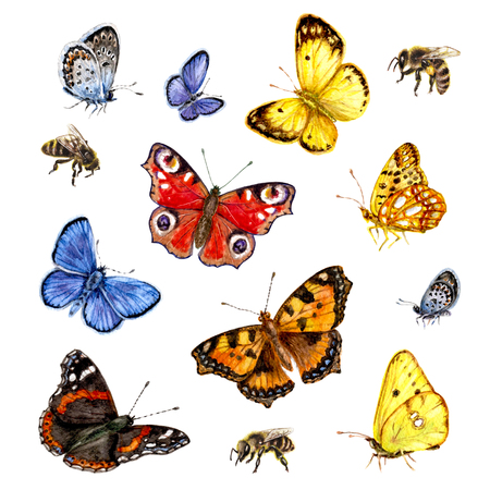 Hand drawn  insects set. Watercolor  flying and sitting vivid butterflies and bees isolated on white background.