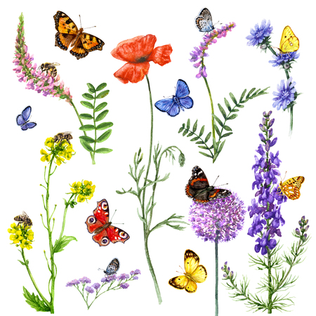 Hand drawn wild flowers and insects. Set of vivid watercolor flying and sitting butterflies, bees near the flowers isolated on white.  Stock Photo
