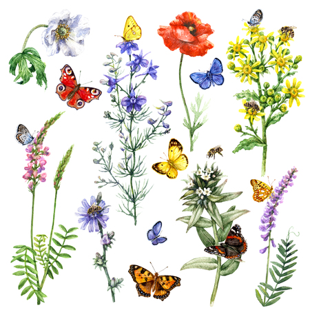 Hand drawn wild flowers and insects. Set of vivid watercolor flying and sitting butterflies, bees near the flowers isolated on white.