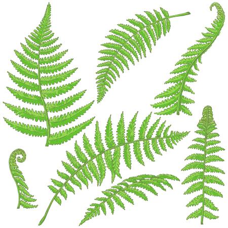 Hand getrokken takken en bladeren van tropische planten. Groene varenvarenbladen die op wit worden geïsoleerd. Vector schets.