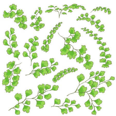 Hand drawn branches and leaves of tropical plants. Green fern fronds isolated on white. Vector sketch.