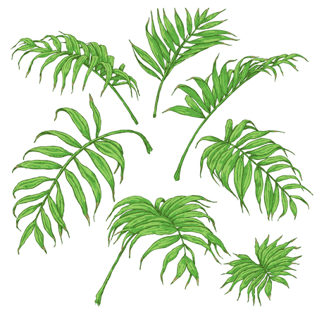 손으로 그려진 된 가지와 열 대 식물의 나뭇잎. 화이트 절연 녹색 팜 fronds입니다. 벡터 스케치입니다.