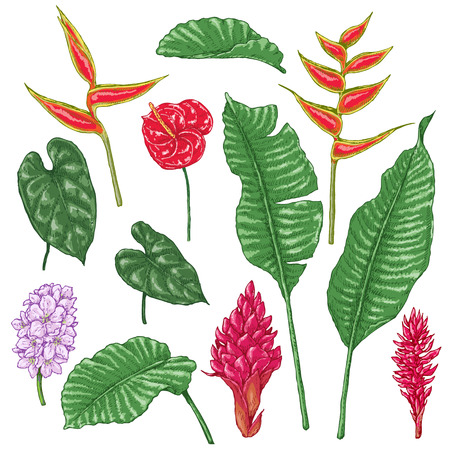 Hand drawn branches and leaves of tropical plants. Vivid tropic flowers isolated on white. Vector sketch.