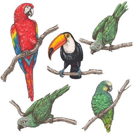 Hand getrokken vogels instellen. Papegaaien en toekan zittend op takken geïsoleerd op wit. Tropische fauna vector schets.