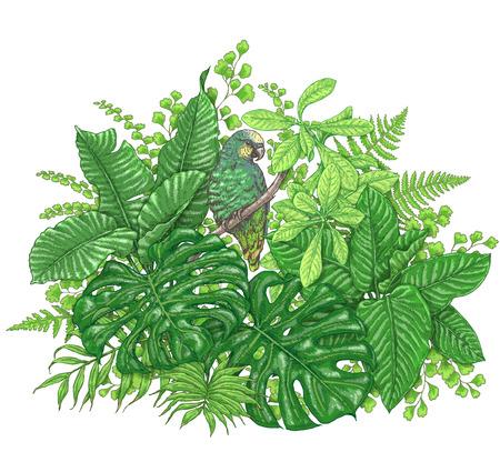 手描きは、枝や葉は熱帯植物の。鮮やかな花の束は、白で隔離鳥。 緑のオウム蔓枝の上に座って。ベクター スケッチ。