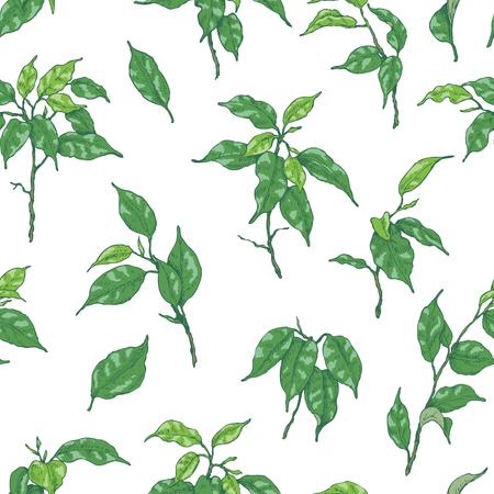 손으로 그려진 된 가지와 열 대 식물의 나뭇잎. 녹색 Ficus 만든 원활한 패턴 벤자민 화이트 절연입니다.