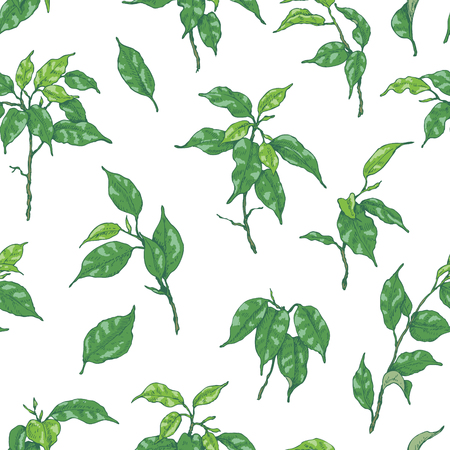 Hand drawn branches and leaves of tropical plants. Seamless pattern made with  green Ficus Benjamin isolated on white.