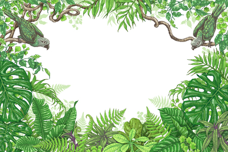 eden: Hand drawn branches and leaves of tropical plants. Vivid rectangle horizontal floral frame with birds sitting on liana branches. Vector sketch. Space for text. Illustration