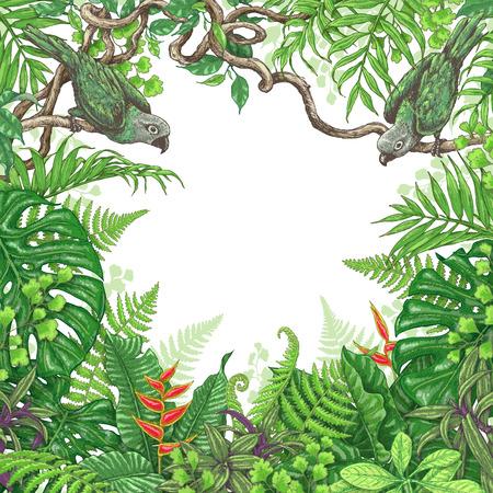 Hand getrokken takken en bladeren van tropische planten. Stock Illustratie