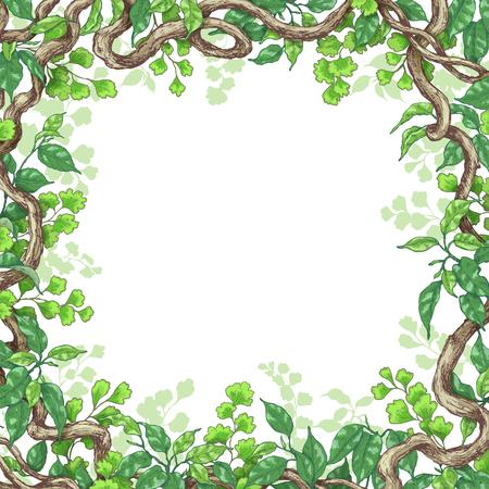 Des branches dessinées à la main et des feuilles de plantes tropicales. Cadre carré avec des fougères vertes, des ficus et des troncs de liane. Espace pour le texte. Croquis vectoriel.