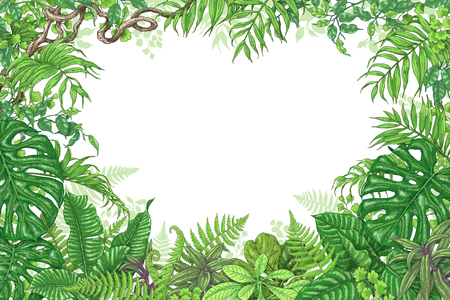 Hand drawn branches and leaves of tropical plants. Green rectangle horizontal floral frame with liana branches. Vector sketch. Space for text.
