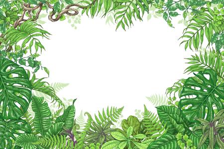 Hand gezeichnete Zweige und Blätter von tropischen Pflanzen. Grüne Rechteck horizontale floralen Rahmen mit Liana Zweige. Vektor skizze Platz für Text.
