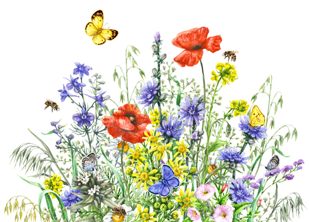 Hand drawn wild flowers and insects. Watercolor vivid wildflowers bunch, flying butterflies and bees isolated on white.