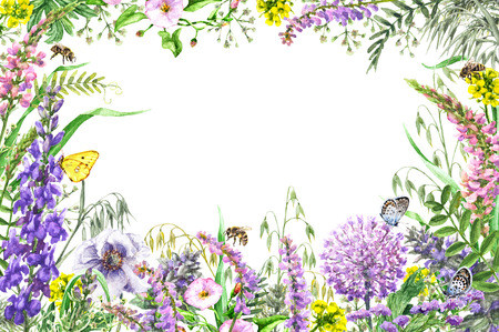 손으로 그린 야생 꽃과 곤충입니다. 노란색, 분홍색, 라일락 야생화, 나비와 꿀벌 비행 수채화 생생한 사각형 가로 프레임. 텍스트를위한 공간입니다. 스톡 콘텐츠